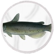 Illustration Of A Channel Catfish Round Beach Towel by Carlyn Iverson