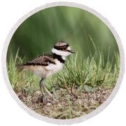 Killdeer - 24 Hours Old Round Beach Towel by Travis Truelove