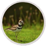 Killdeer Round Beach Towel by Karol Livote