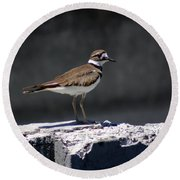 Killdeer Round Beach Towel by M Images Fine Art Photography and Artwork