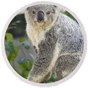 Koala Female Portrait Round Beach Towel by Jamie Pham