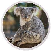 Koala In Tree Round Beach Towel by Jamie Pham