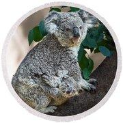 Koala Joey And Mom Round Beach Towel by Jamie Pham