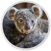 Koala Joey Close Round Beach Towel by Jamie Pham