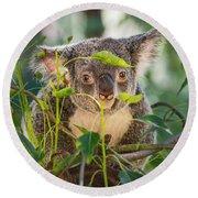 Koala Leaves Round Beach Towel by Jamie Pham