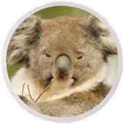 Koala Snack Round Beach Towel by Mike  Dawson