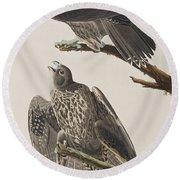 Labrador Falcon Round Beach Towel by John James Audubon