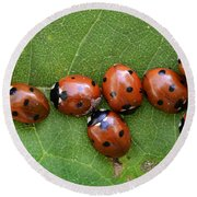 Lady Bugs  Round Beach Towel by Bob Christopher