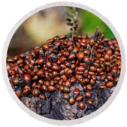 Ladybugs On Branch Round Beach Towel by Garry Gay