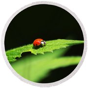 Little Red Ladybug On Green Leaf Round Beach Towel by Christina Rollo