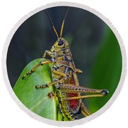 Lubber Grasshopper Round Beach Towel by Richard Rizzo