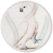 Major Mitchell's Cockatoo Round Beach Towel by Nicolas Robert