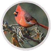 Male Cardinal Round Beach Towel by Ken Everett