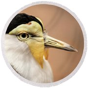 Masked Lapwing Round Beach Towel by Don Johnson