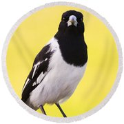 Mr. Magpie Round Beach Towel by Jorgo Photography - Wall Art Gallery