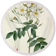 Musk Rose Round Beach Towel by Pierre Joseph Redoute
