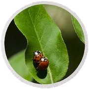 Nature - Love Bugs Round Beach Towel by Christina Rollo
