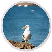 Nazca Booby On A Rock Round Beach Towel by Jess Kraft