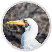 Nazca Booby View Round Beach Towel by Jess Kraft