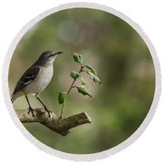 Northern Mockingbird Branch New Jersey Round Beach Towel by Terry DeLuco