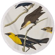 Nuttall's Starling Yellow-headed Troopial Bullock's Oriole Round Beach Towel by John James Audubon