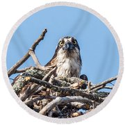 Osprey Eyes Round Beach Towel by Paul Freidlund