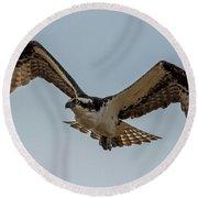 Osprey Flying Round Beach Towel by Paul Freidlund