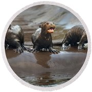 Otter Pup Triplets Round Beach Towel by Jamie Pham