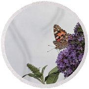 Painted Lady (vanessa Cardui) Round Beach Towel by John Edwards