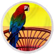 Parrot Sitting On Chair Round Beach Towel by Garry Gay