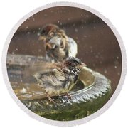 Pass The Towel Please: A House Sparrow Round Beach Towel by John Edwards