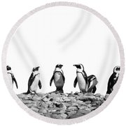 Penguins Round Beach Towel by Delphimages Photo Creations