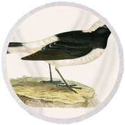 Pied Wheatear Round Beach Towel by English School