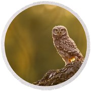 Qui, Moi? Little Owlet In Warm Light Round Beach Towel by Roeselien Raimond