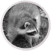 Raccoon - Black And White Round Beach Towel by Carol Groenen
