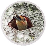 Red-bellied Woodpecker 03 Round Beach Towel by Al Powell Photography USA