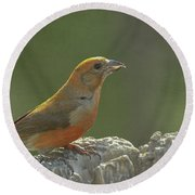 Red Crossbill Round Beach Towel by Constance Puttkemery