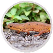 Red Eft - Close Up Round Beach Towel by Kerri Farley
