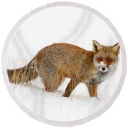 Red Fox In A Snow Covered Scene Round Beach Towel by Roeselien Raimond