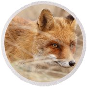 Red Fox On The Hunt Round Beach Towel by Roeselien Raimond