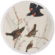 Red Winged Starling Or Marsh Blackbird Round Beach Towel by John James Audubon
