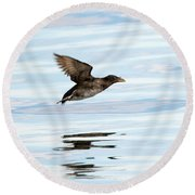 Rhinoceros Auklet Reflection Round Beach Towel by Mike Dawson