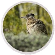 Roadrunner On Guard  Round Beach Towel by Saija  Lehtonen