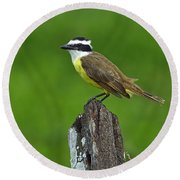Roadside Kiskadee Round Beach Towel by Tony Beck