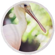 Roseate Spoonbill Round Beach Towel by Heather Applegate