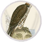 Saker Falcon Round Beach Towel by English School