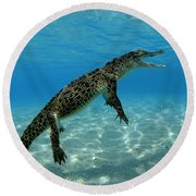 Saltwater Crocodile Round Beach Towel by Franco Banfi and Photo Researchers