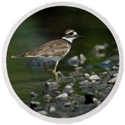 Killdeer  Round Beach Towel by Douglas Stucky