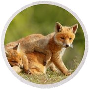 Sibbling Love - Playing Fox Cubs Round Beach Towel by Roeselien Raimond