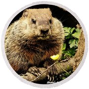 Sittin Among The Buttercups Round Beach Towel by Tami Quigley